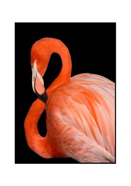 flamingo poster fra artified