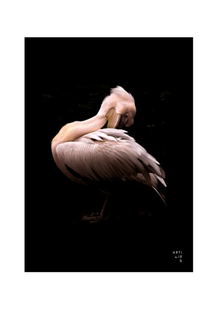 pelican poster fra artified
